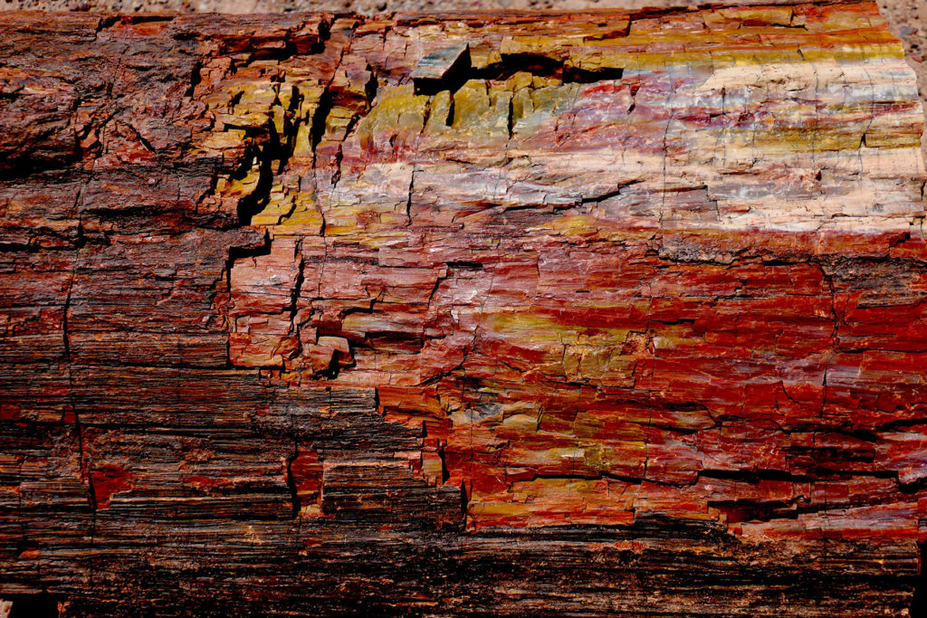 Petrified log, Petrified Forest National Park (Photo: Bruce Barkhauer)